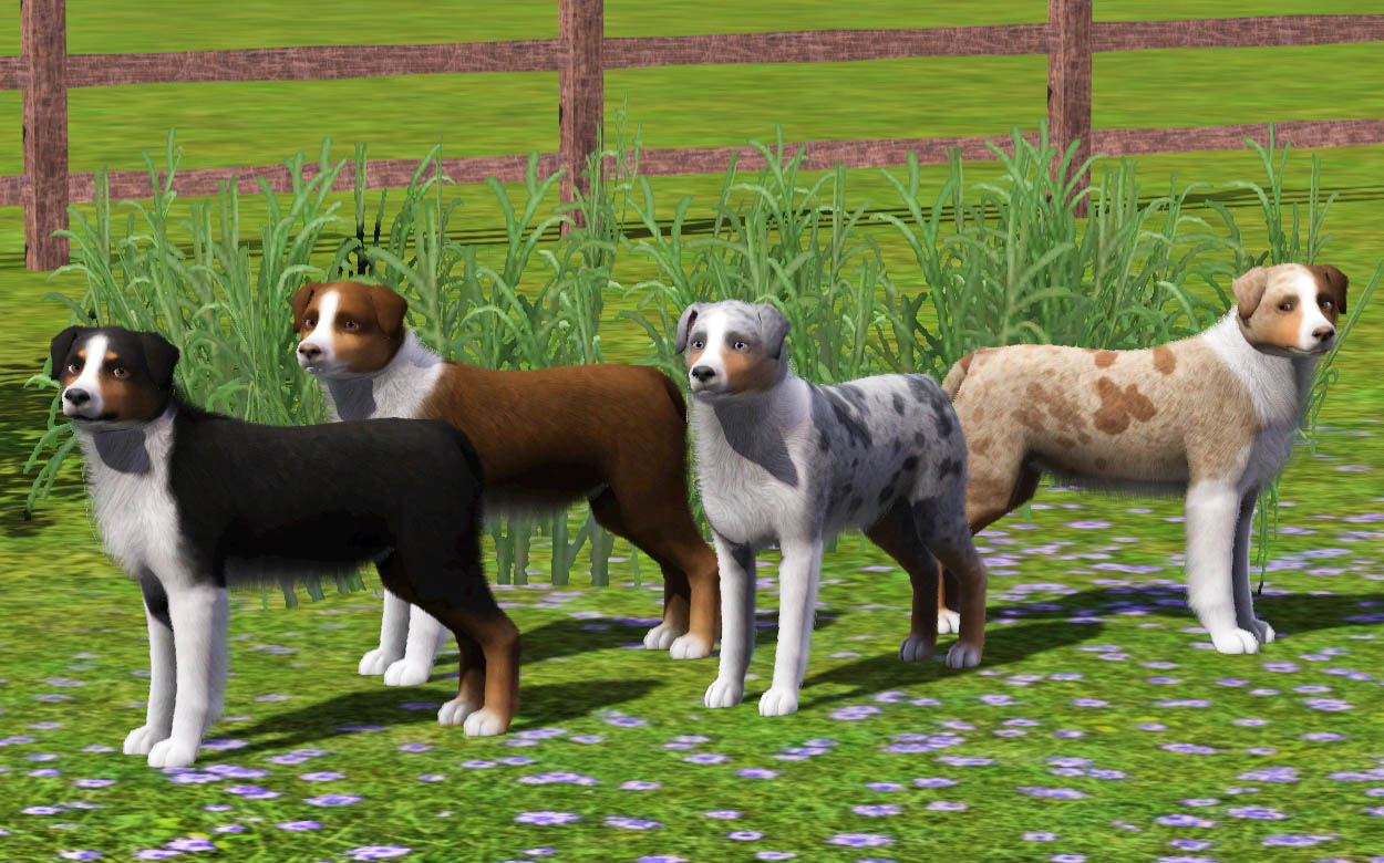 Sims  Extract Pets Cats