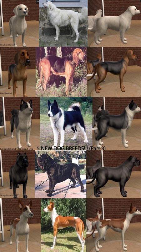 Sims  Big Dog Breeds