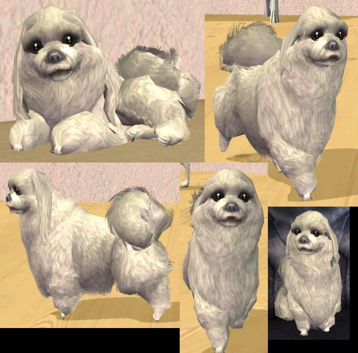 Mod The Sims - Maltese with long hairstyle x 2