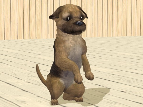 Sims  Cats And Dogs Downloade Avalible Origin