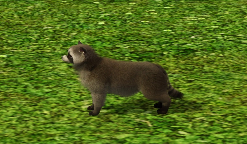 The Sims Dogs And Cats Racoon