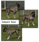Click image for larger version Name: Junkyard Boxer.jpg Size: 145.9 KB