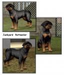 Click image for larger version Name: Junkyard Rottweiler.jpg Size: 132.6 KB