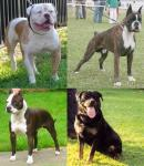 Click image for larger version Name: 4 Real Life Breed Examples.jpg Size: 149.9 KB