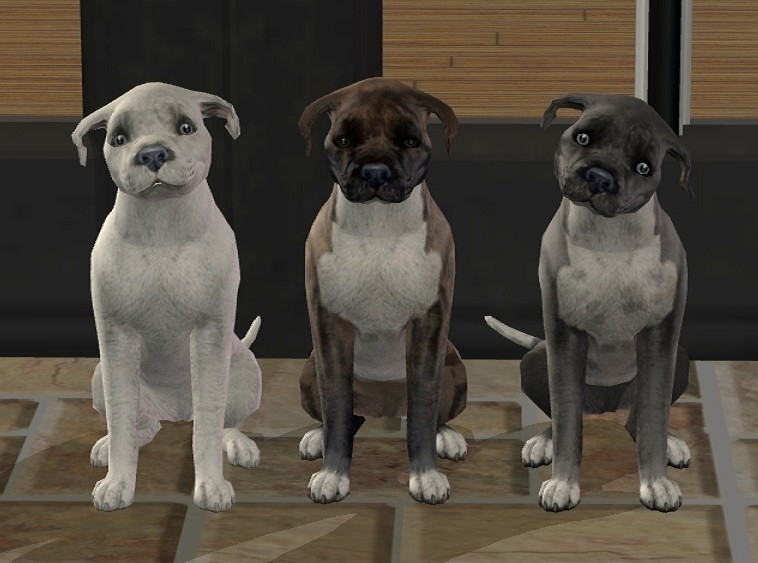 Sims  Cat And Dogs Sale