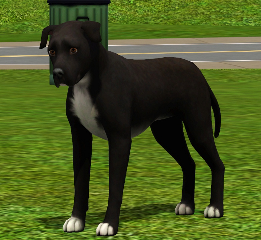 sims relations needs your pets lottery page 4 the sims forums. Black Bedroom Furniture Sets. Home Design Ideas
