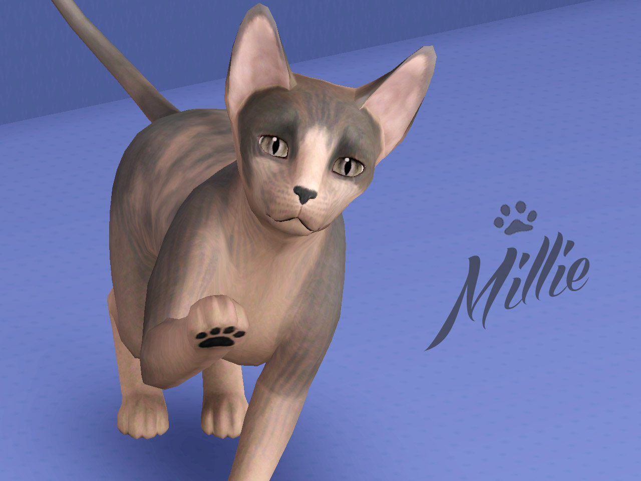 Mod The Sims Millie The Hairless Cat