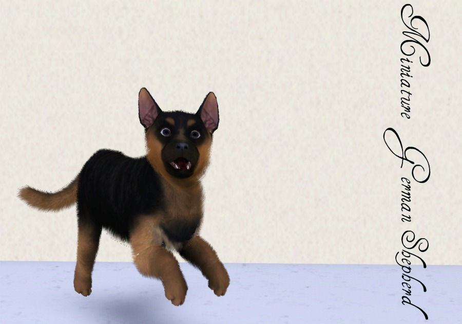 miniature german shepherd breed mod the sims miniature breeds part one 5330