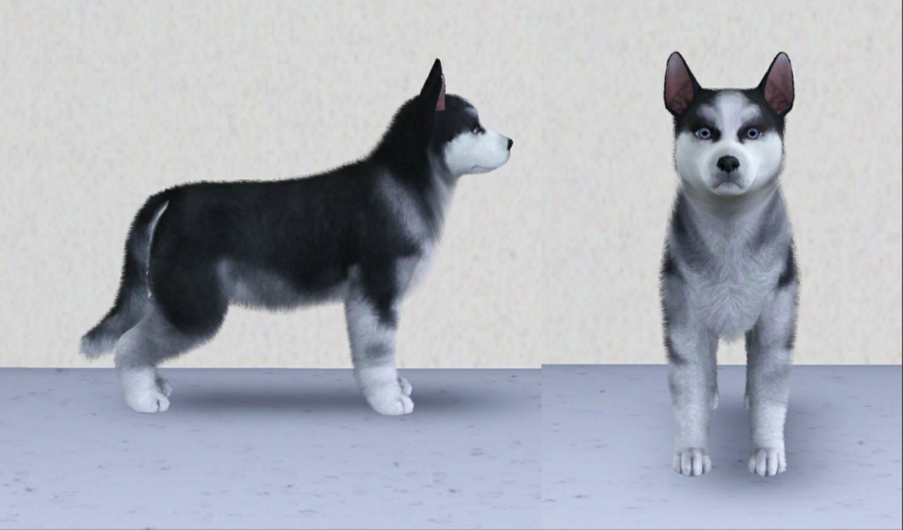 Sims  Cats And Dogs Husky