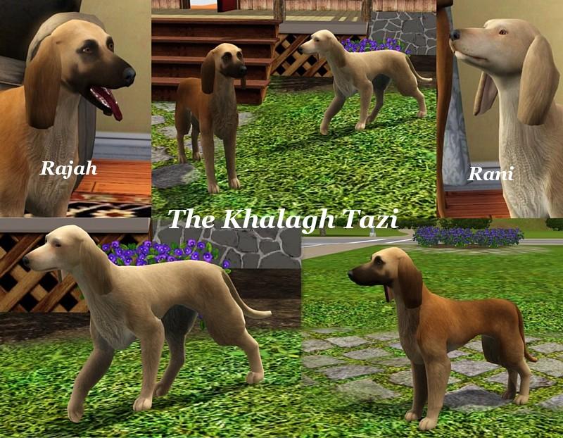 Sims 3 Afghan Hound Mod The Sims - The Kha...