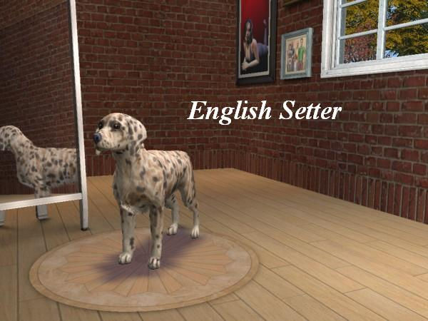 Sims 3 Afghan Hound Various Setter breeds