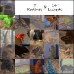 Click image for larger version Name: lizardsandrodents.jpg Size: 214.9 KB