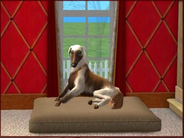Sims 3 Afghan Hound Screenshots