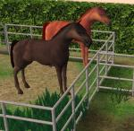 Click image for larger version Name: Horse HQ.jpg Size: 93.1 KB